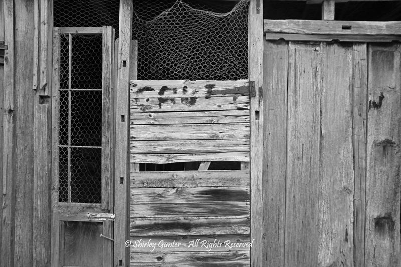 Timber Texture by Shirley Gunter