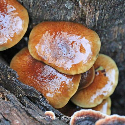 Logs with Fungus by Jeanette Robben