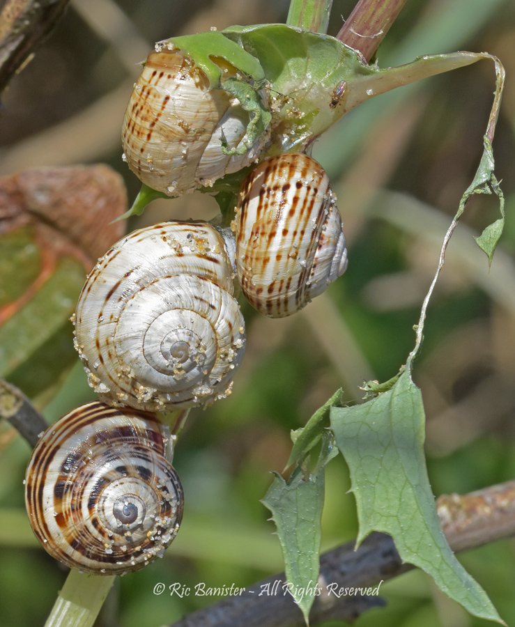 Snail Party by Ric Banister