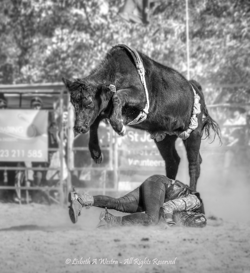 Taking a Fall by Beth Westra