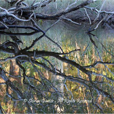 Lagoon  reflections by Shirley Gunter