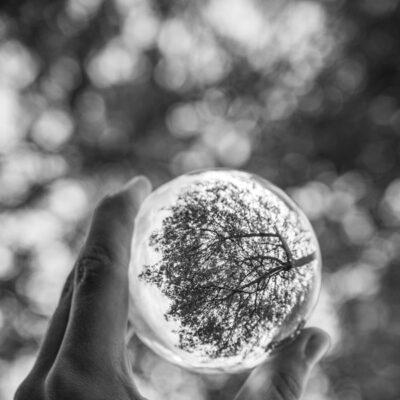 Ball of Life by Daniel Bateman