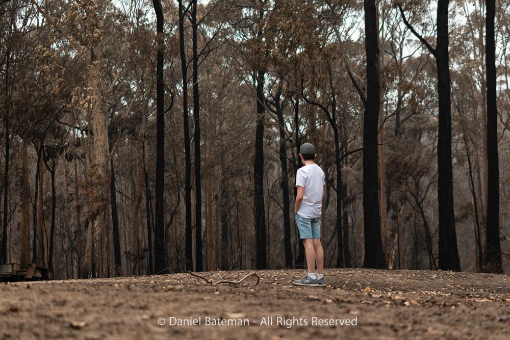 Bushland Once Green by Daniel Bateman