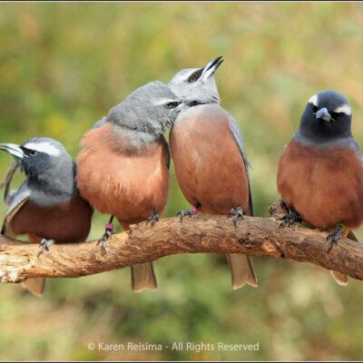 Four is a crowd by Karen Reisima