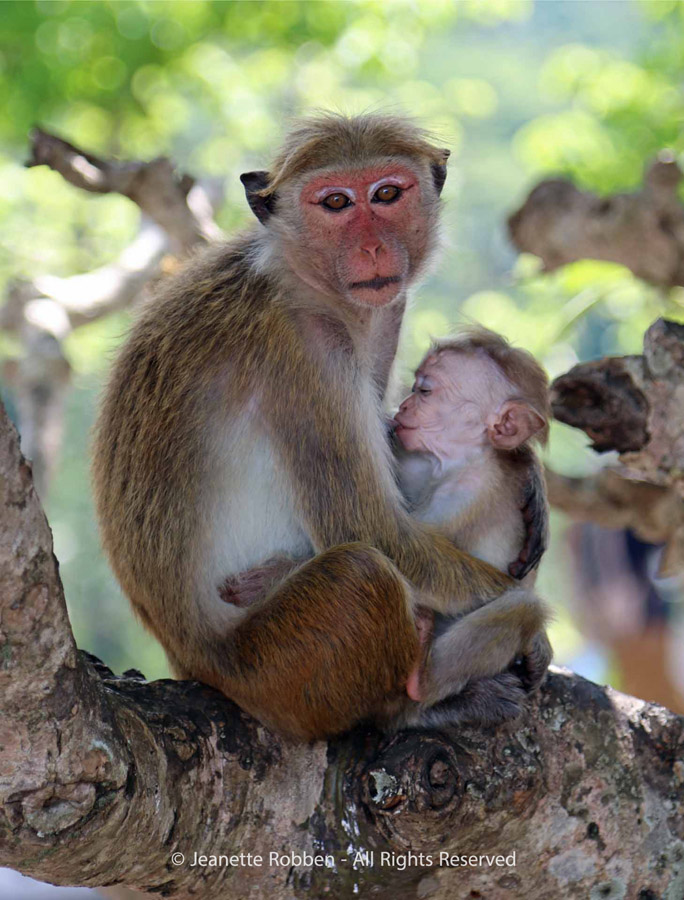 Monkey and Baby by Jeanette Robben